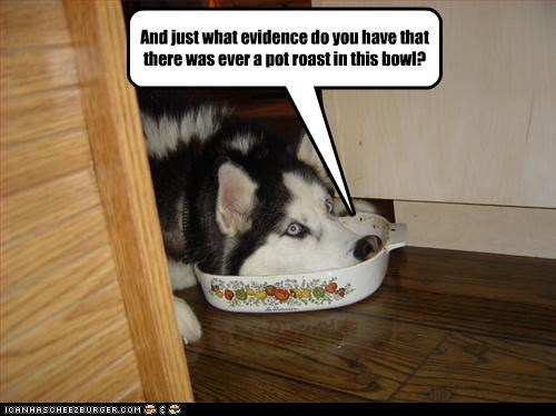 bowl,denial,denying,evidence,excuse,guilty,husky,noms,pot roast,question,what