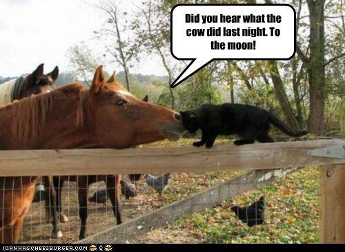 Did you hear what the cow did last night. To the moon!