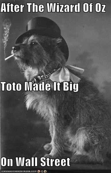 animal dogs funny Photo photograph wtf - 4491975936
