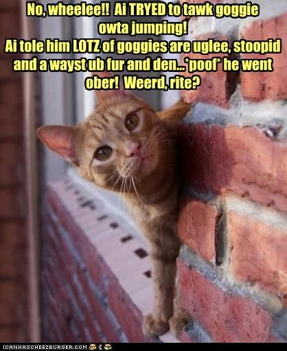 No, wheelee!! Ai TRYED to tawk goggie owta jumping! Ai tole him LOTZ of goggies are uglee, stoopid and a wayst ub fur and den...*poof* he went ober! Weerd, rite?
