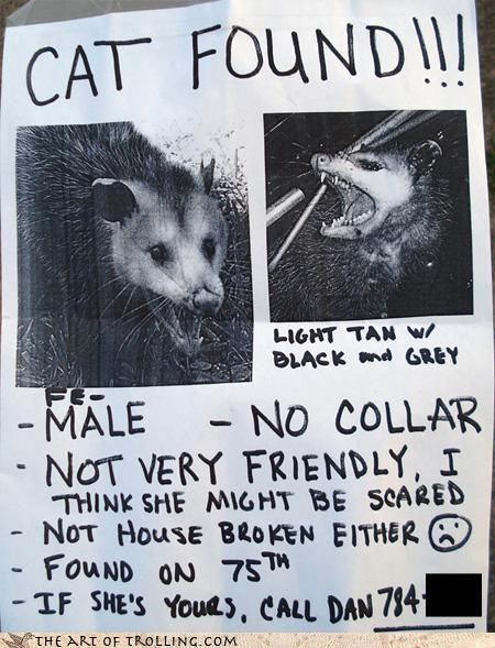 cat found IRL lost opossum playing dead poster scared - 4492504832