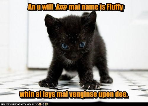 basement cat caption captioned cat evil Fluffy Hall of Fame kitten name revenge threat vengeance vow you will know - 4493233920