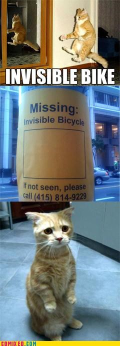 Cats,Caturday,in this economy,invisible bike,theft