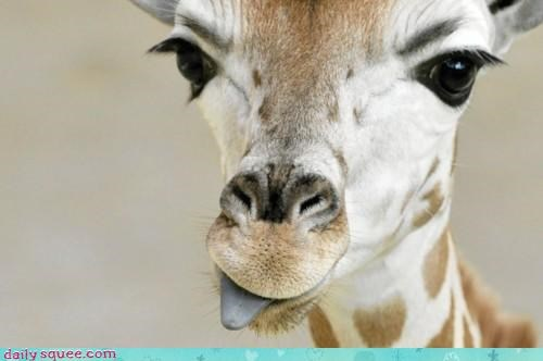 acting like animals giraffes insult mocking sticking out taunting tongue - 4493509632