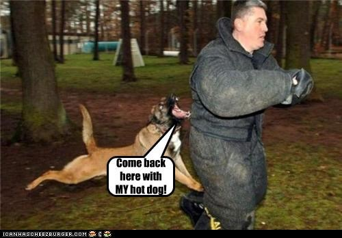 angry chasing come come back hot dog hotdog mine ownership upset whatbreed - 4493569024