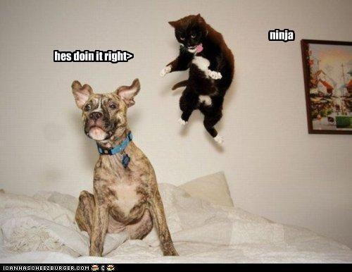 ninja hes doin it right>