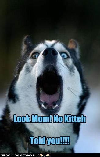 Look Mom! No Kitteh Told you!!!!
