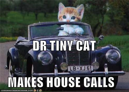call caption captioned car cat dr tinycat driving house house call kitten photoshop - 4493673984
