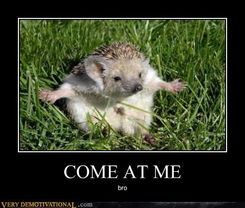 come at me,bro,hedgehog