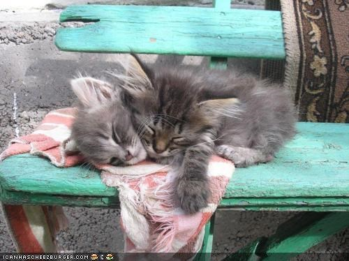 asleep,bench,cyoot kitteh of teh day,nap,on top,outside,picnic,sleep,two cats