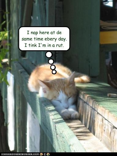 caption,captioned,cat,everyday,gutter,here,kitten,literalism,nap,pun,rut,same,sleeping,time