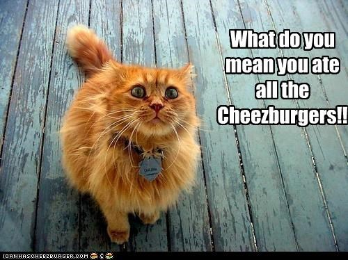 Cheezburger Image 4494520832