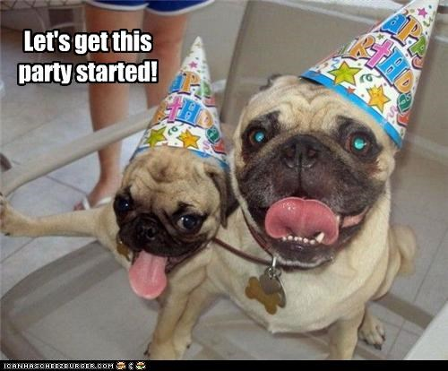 excited hat hats Party party hat pug pugs ready start started - 4495063808