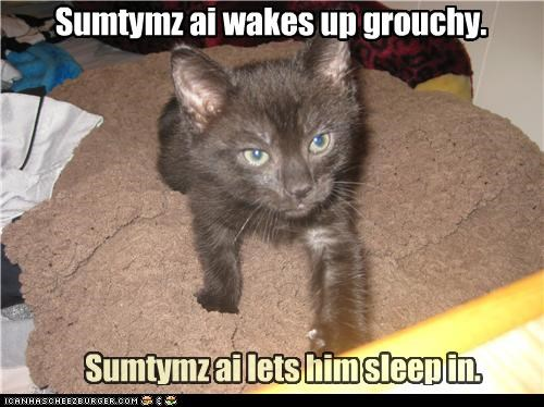 asleep,caption,captioned,cat,grouchy,name,pun,sleep,sleep in,sleeping in,sometimes,up,wake,wake up,waking up