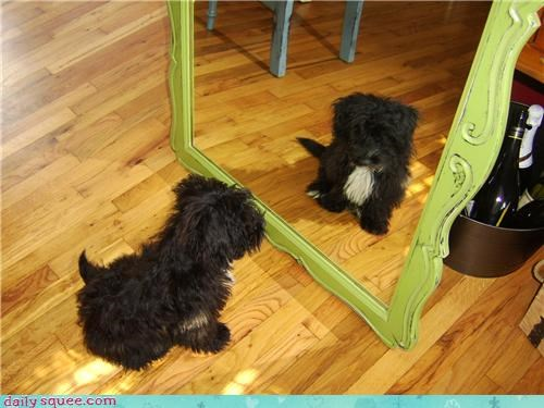 compromise encouragement encouraging mirror need plan proposal puppy quote Sad Staring