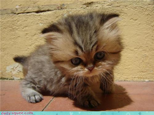 addition cat equals equation gigantic head itty bitty kitten math mathematics squee - 4495562496