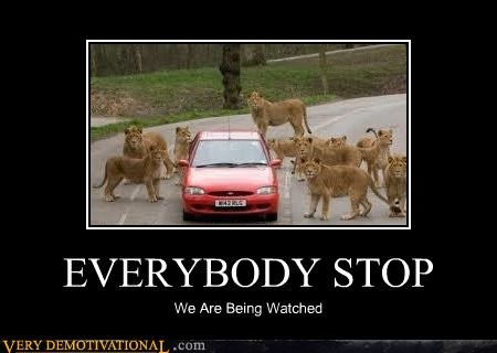 animals,car,lions,scary,wtf