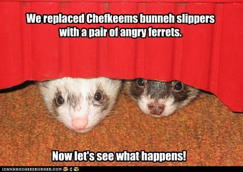 We replaced Chefkeems bunneh slippers with a pair of angry ferrets. Now let's see what happens!