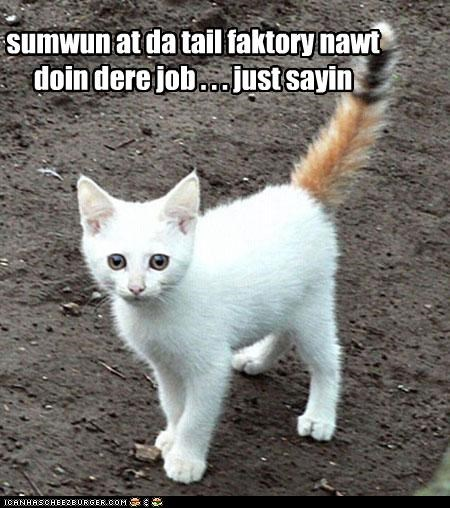 caption,captioned,cat,color,coloration,confused,factory,FAIL,just saying,kitten,orange,tail,white