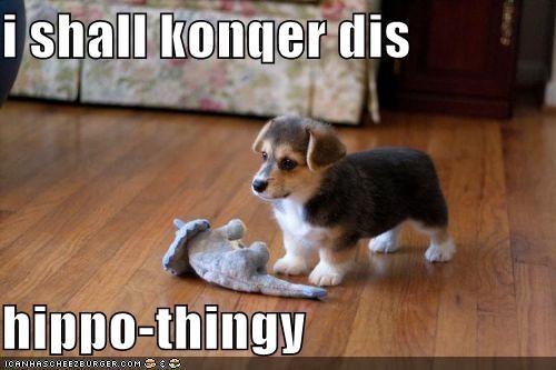 Cheezburger Image 4495943936