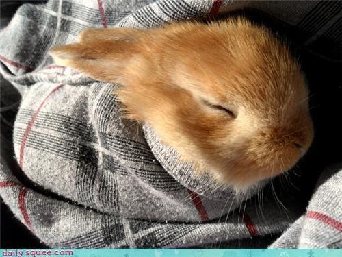 23 23 days old baby bundle bundled up bunny days newborn old pun reader squees - 4495985920