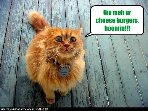 Cheezburger Image 4496270848