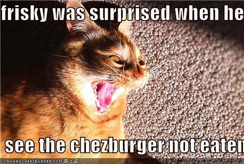 Cheezburger Image 4496592128