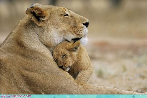 baby care compassion cub cuddling family lion love maternal mother pun - 4496847360