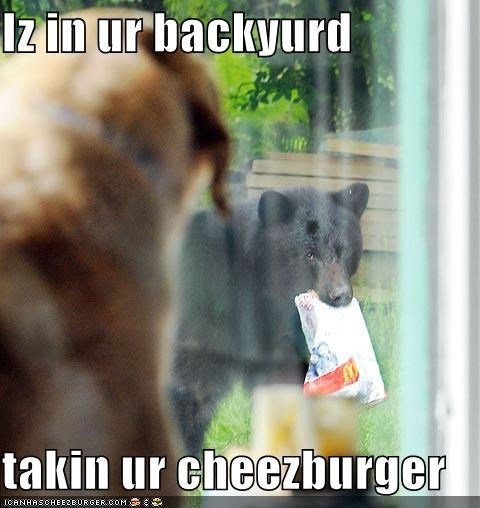 Cheezburger Image 4497125888