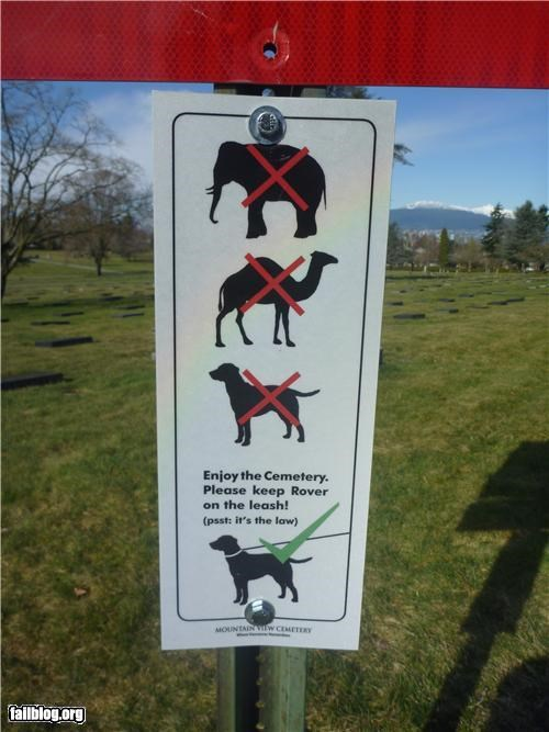 Oddly Specific: No elephants Can I at least bring my zebra?