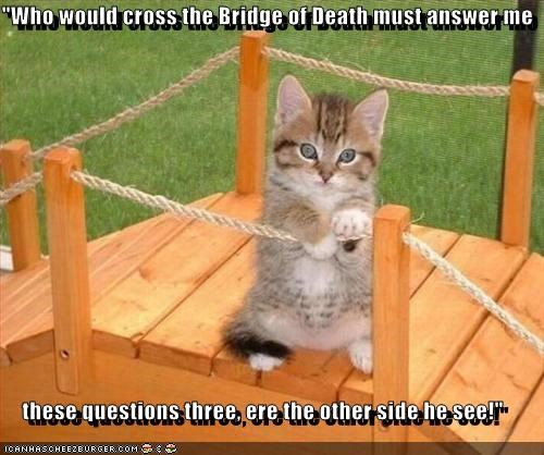 answer,bridge,caption,captioned,cat,cross,famous,Hall of Fame,kitten,monty python,monty python and the holy grail,questions,quote,requirement,task,three