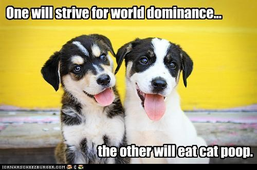 cat poop happy happy dog husky puppy smile smiles smiling whatbreed world dominance - 4498104064