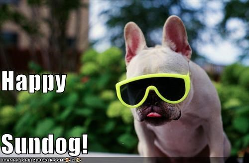 cool fashion french bulldogs happy happy sundog smiling style stylish Sundog sunglasses - 4499356416