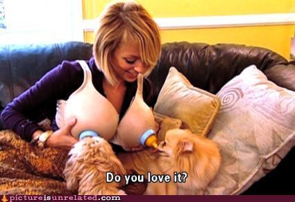 babe bewbs dogs wtf - 4499400960
