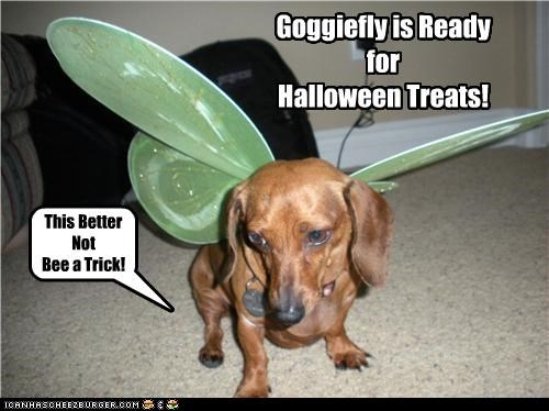 Goggiefly is Ready for Halloween Treats! This Better Not Bee a Trick!