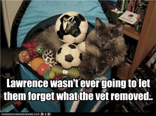 balls,caption,captioned,cat,damage,forget,implication,implying,never,remember,removed,vet