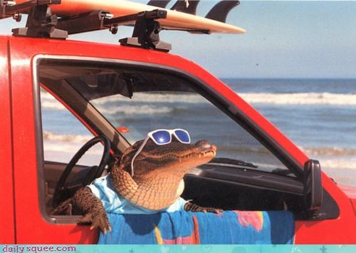 acting like animals alligator beach excited sand sun sunglasses surf surfing tanning vacation - 4500459264