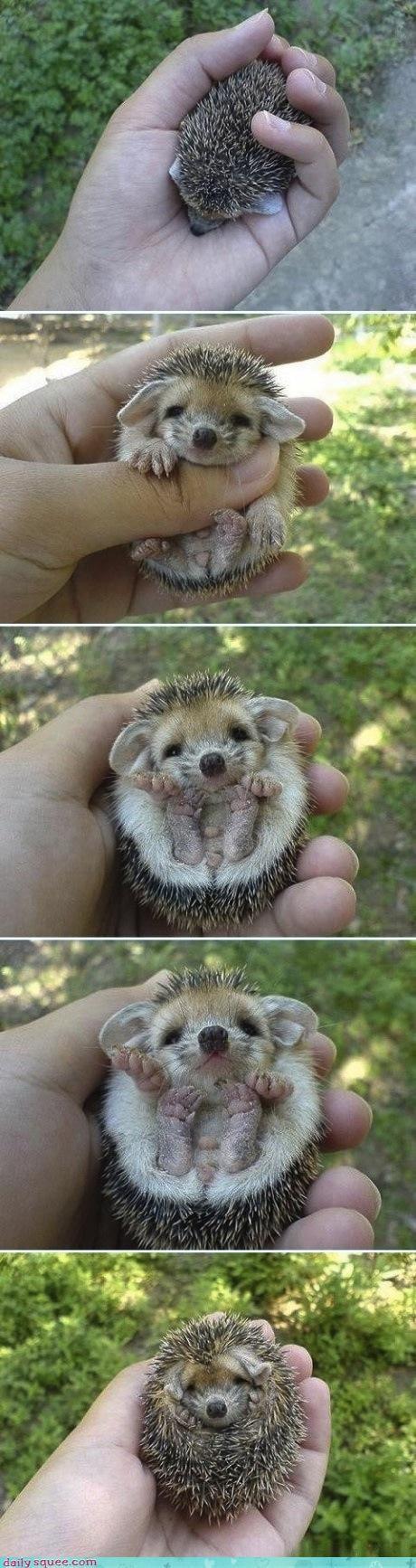 cute hedgehog slow motion sonic sonic the hedgehog technology - 4500474880