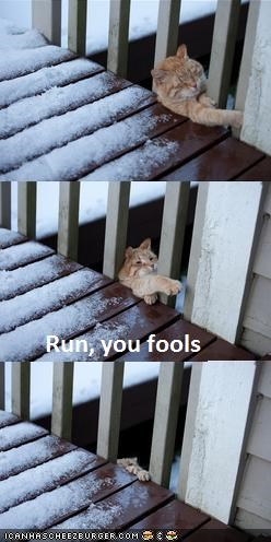 caption,captioned,deck,FAIL,fall,Hall of Fame,multipanel,porch,snow