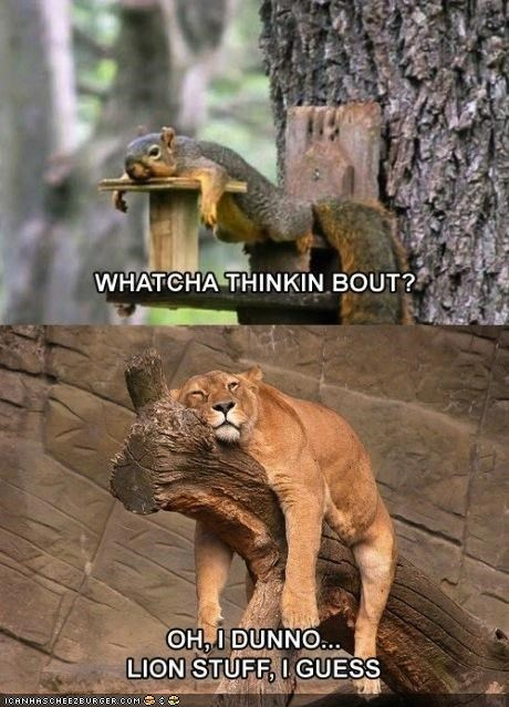 lazy,lions,log,multipanel,silly,squirrels,thinking,tired