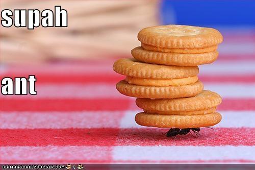 Cheezburger Image 4500994816