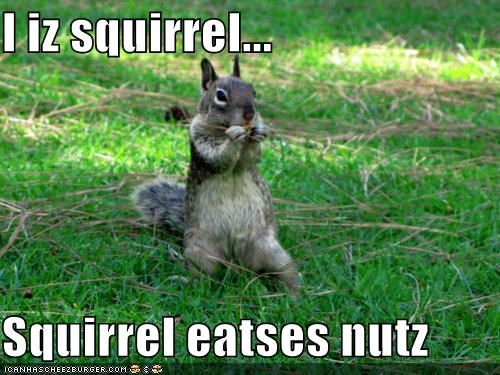 i iz squirrel squirrel eatses nutz i can has cheezburger