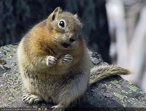 chubby squirrel holding its paws up and tilting its head while looking at the camera