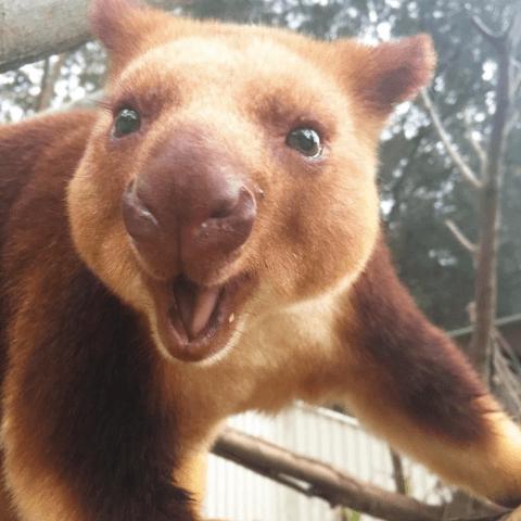 aww kangoroo cute tree animals - 4501509