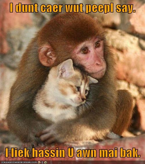 back,caption,captioned,cat,cliché,cuddling,dont-care,friendship,kitten,monkey,saying