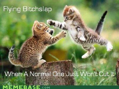 attack kitten le slap Memes - 4501661952