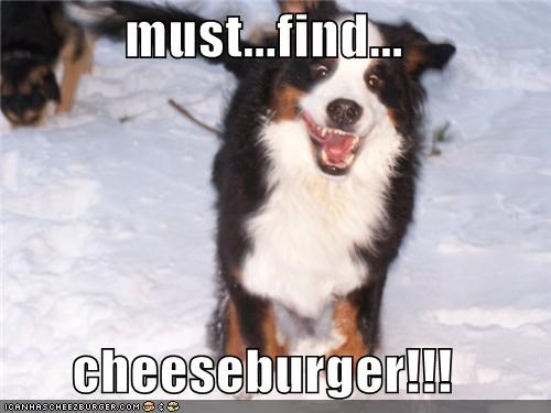 Cheezburger Image 4502546944