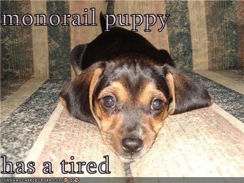 dachshund i has monorail monorail dog monorail puppy puppy tired