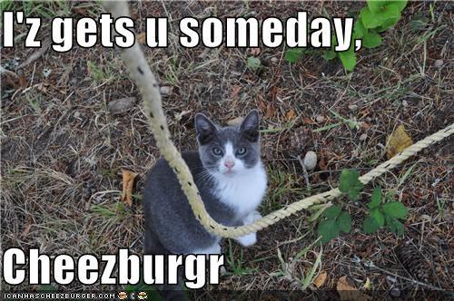 Cheezburger Image 4503115008
