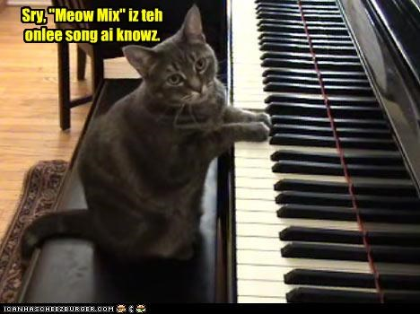 caption captioned cat meow mix piano playing song sorry - 4503531776